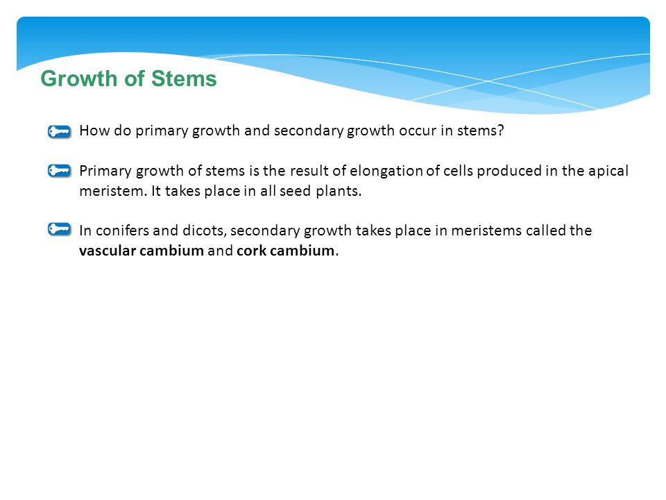 Growth of Stems How do primary growth and secondary growth occur in stems