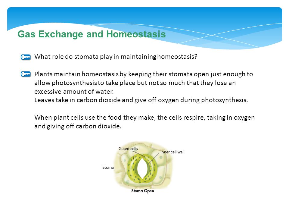 Gas Exchange and Homeostasis