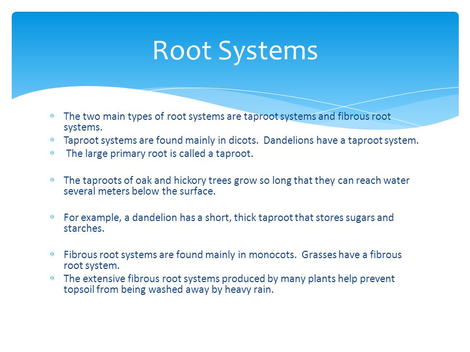 Root Systems The two main types of root systems are taproot systems and fibrous root systems.