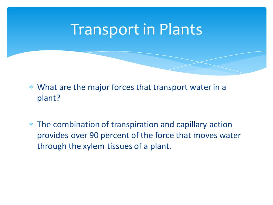 Transport in Plants What are the major forces that transport water in a plant