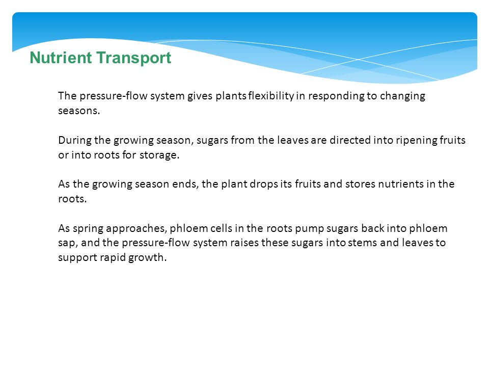 Nutrient Transport The pressure-flow system gives plants flexibility in responding to changing seasons.