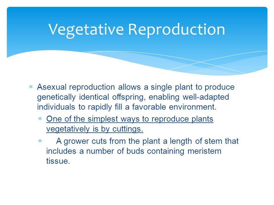 Vegetative Reproduction