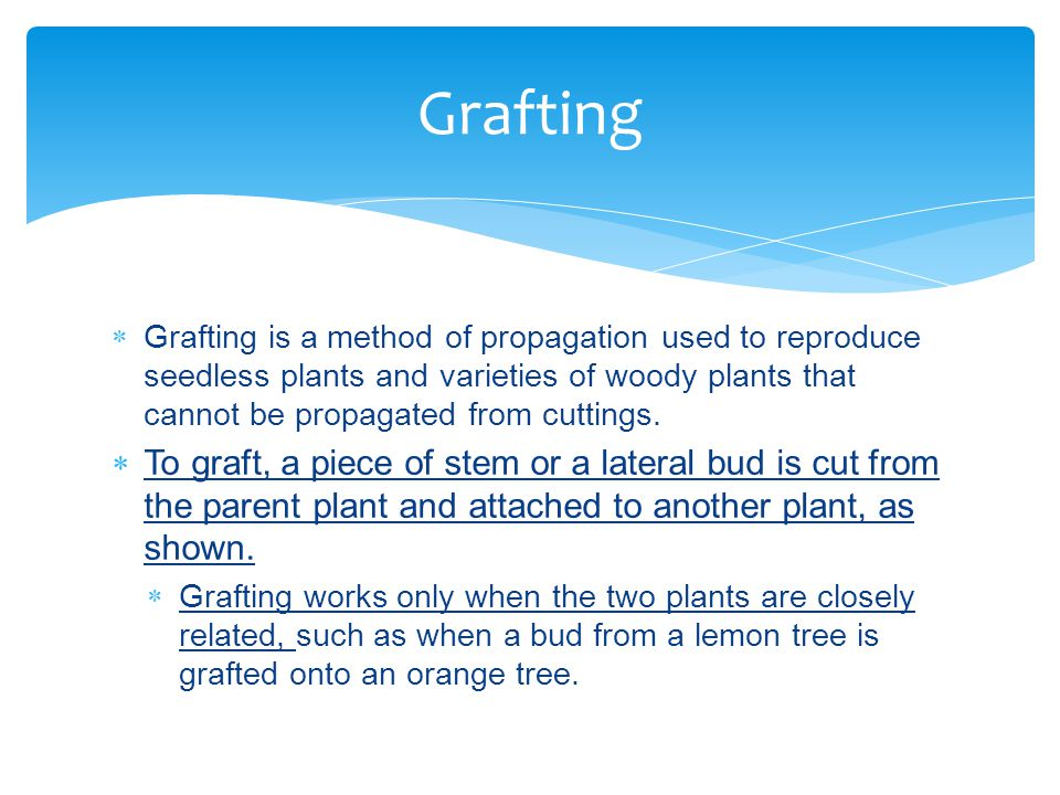 Grafting Grafting is a method of propagation used to reproduce seedless plants and varieties of woody plants that cannot be propagated from cuttings.