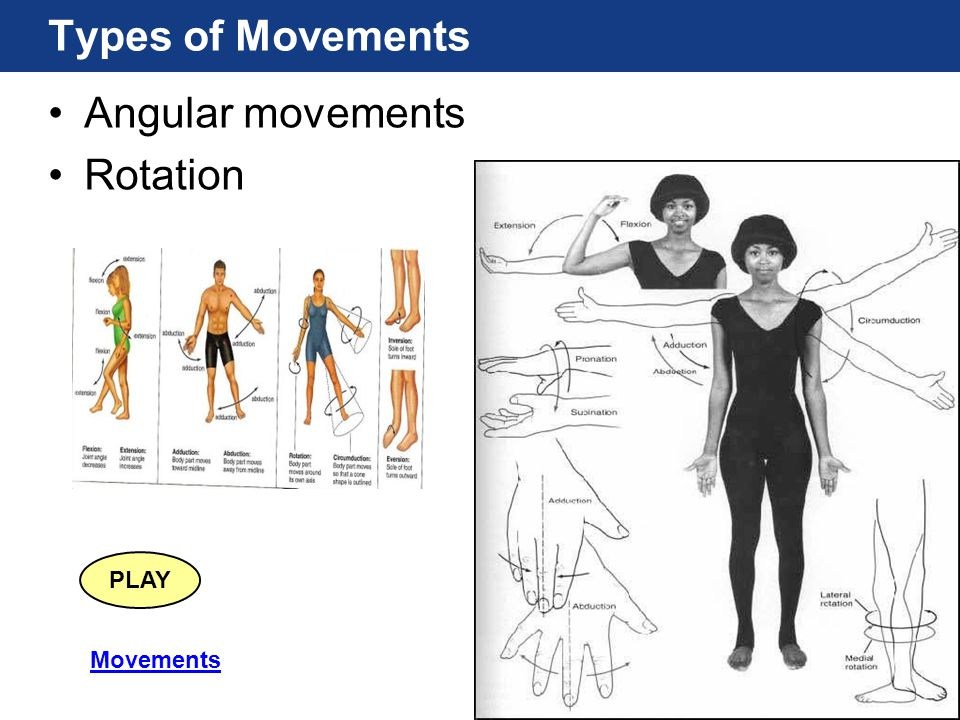 Types of Movements Angular movements Rotation PLAY Movements