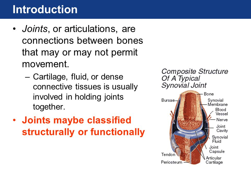 Introduction Joints, or articulations, are connections between bones that may or may not permit movement.