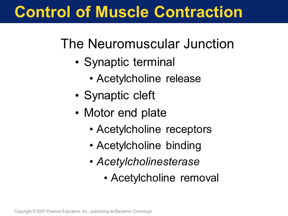 Control of Muscle Contraction