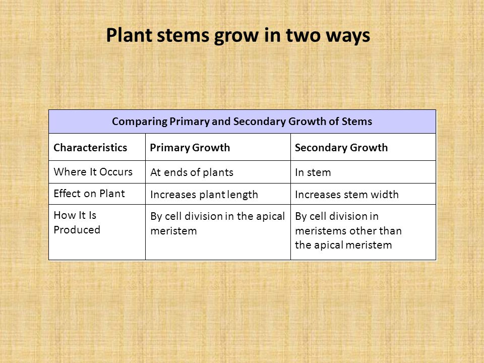 Plant stems grow in two ways