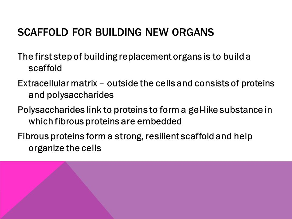 SCAFFOLD FOR BUILDING NEW ORGANS