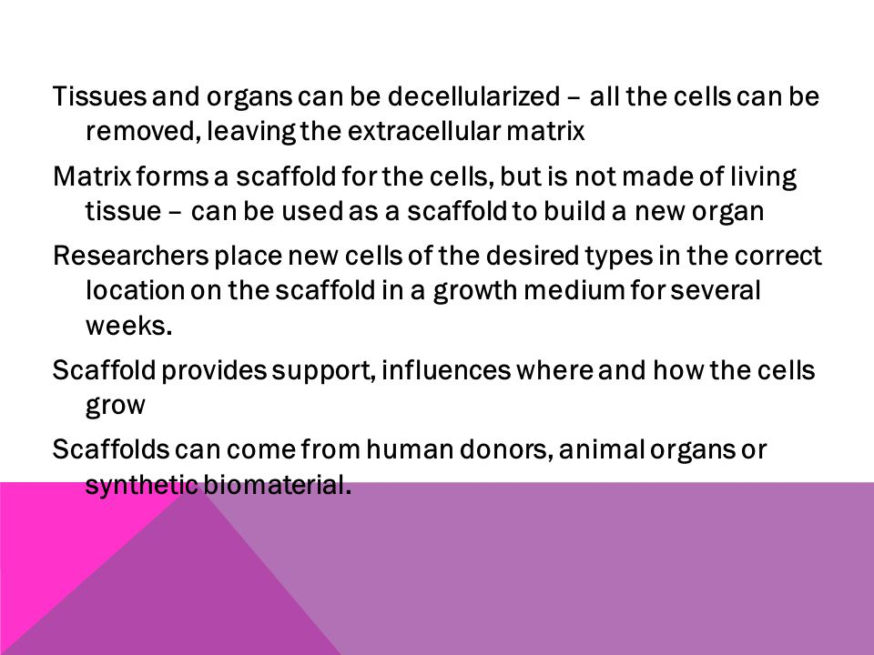 Tissues and organs can be decellularized – all the cells can be removed, leaving the extracellular matrix Matrix forms a scaffold for the cells, but is not made of living tissue – can be used as a scaffold to build a new organ Researchers place new cells of the desired types in the correct location on the scaffold in a growth medium for several weeks.