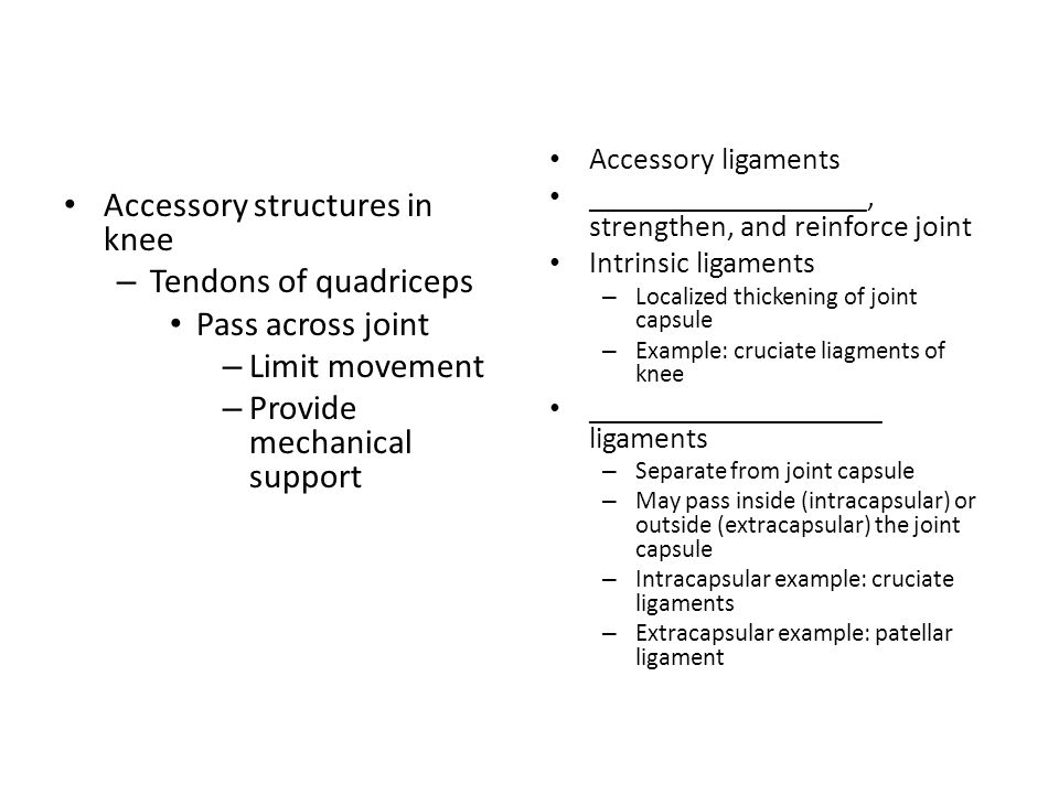 Accessory structures in knee Tendons of quadriceps Pass across joint
