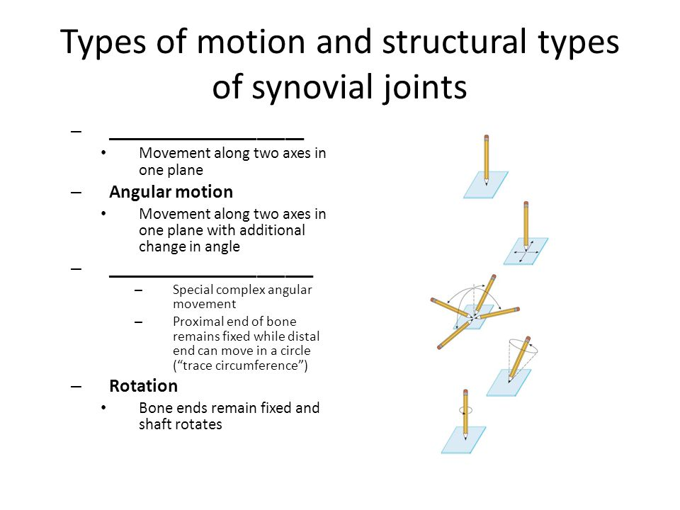 Types of motion and structural types of synovial joints