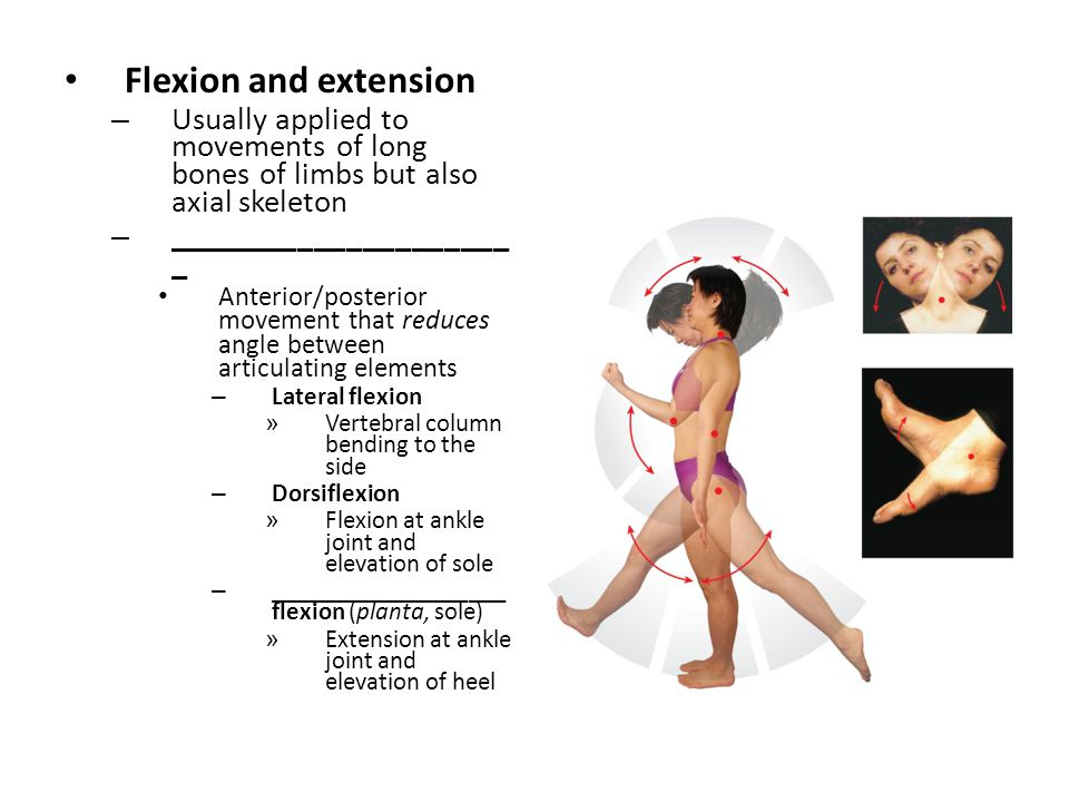 Flexion and extension Usually applied to movements of long bones of limbs but also axial skeleton. ______________________.
