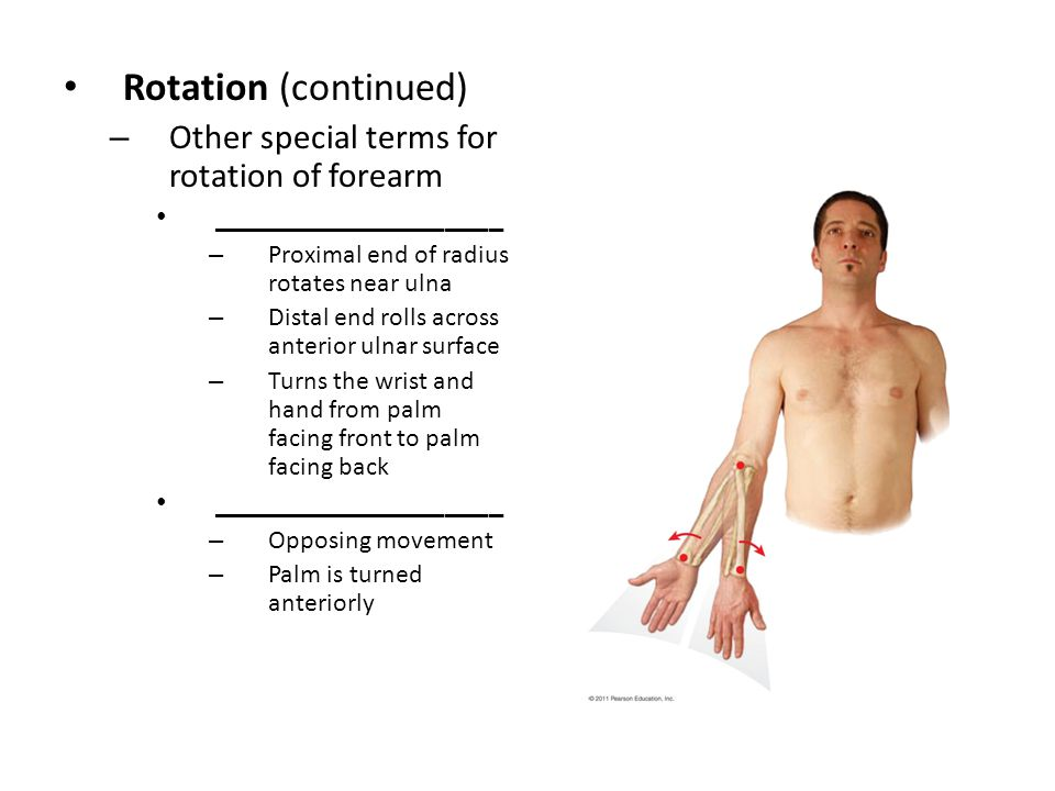 Rotation (continued) Other special terms for rotation of forearm