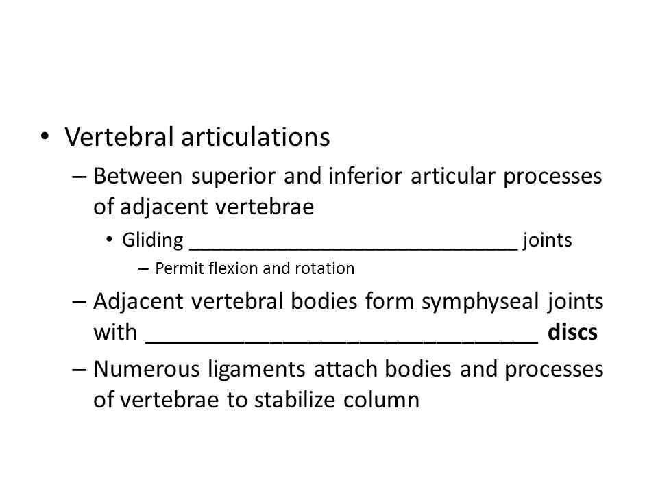 Vertebral articulations