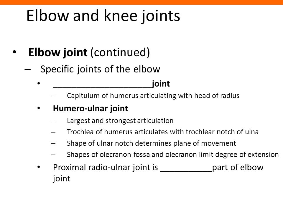 Elbow and knee joints Elbow joint (continued)