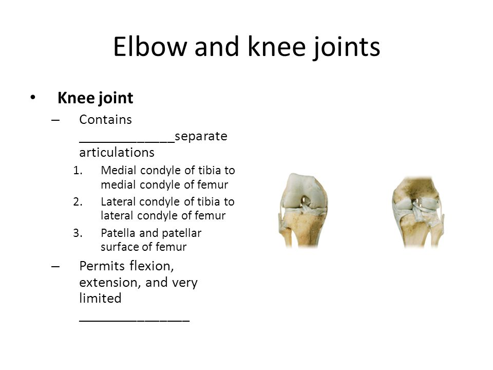 Elbow and knee joints Knee joint
