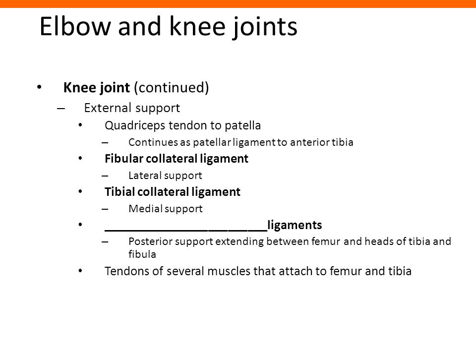 Elbow and knee joints Knee joint (continued) External support
