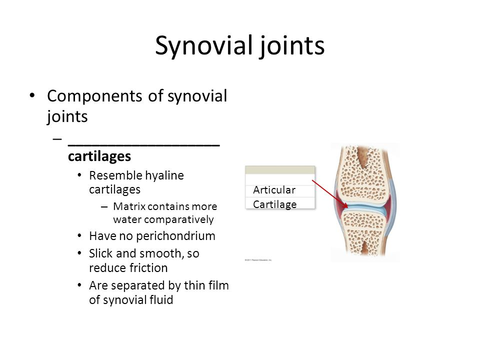 Synovial joints Components of synovial joints