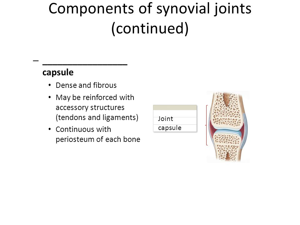 Components of synovial joints (continued)