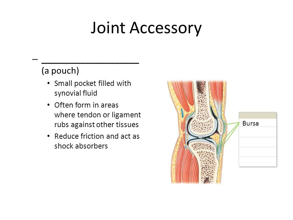 Joint Accessory ____________________ (a pouch)