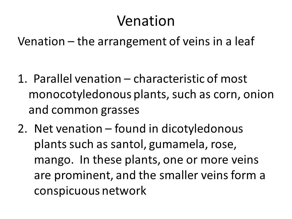 Venation Venation – the arrangement of veins in a leaf