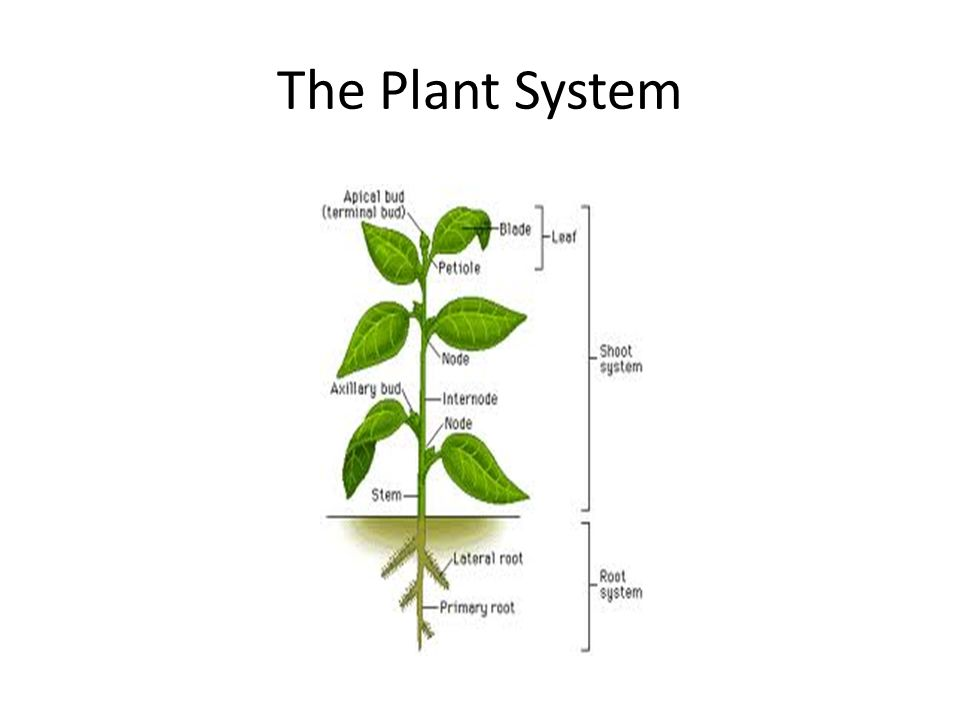 The Plant System