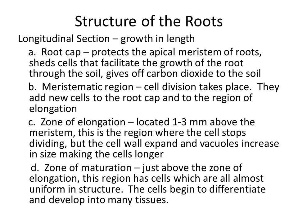 Structure of the Roots