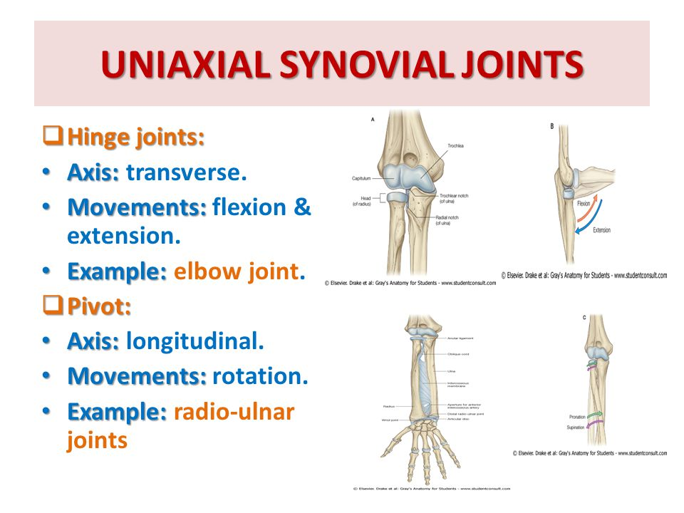 UNIAXIAL SYNOVIAL JOINTS