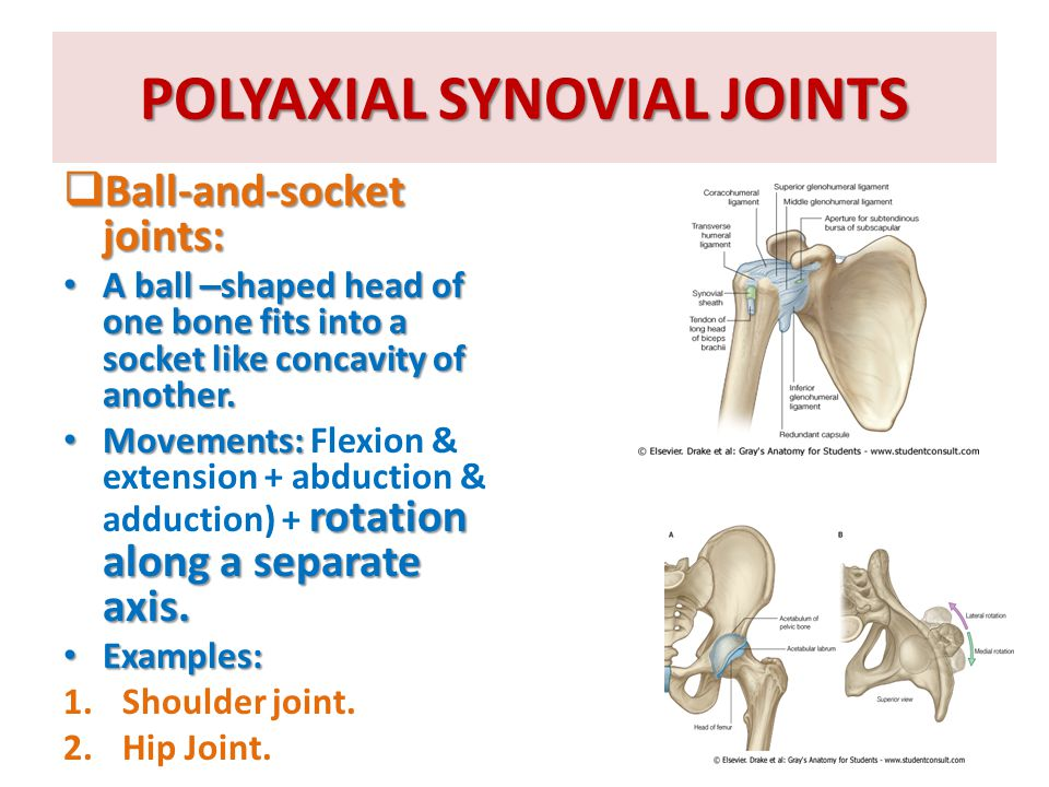 POLYAXIAL SYNOVIAL JOINTS