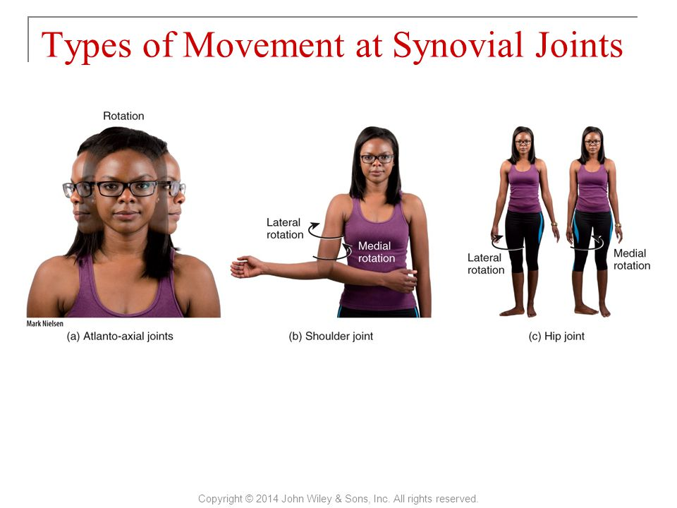 Types of Movement at Synovial Joints