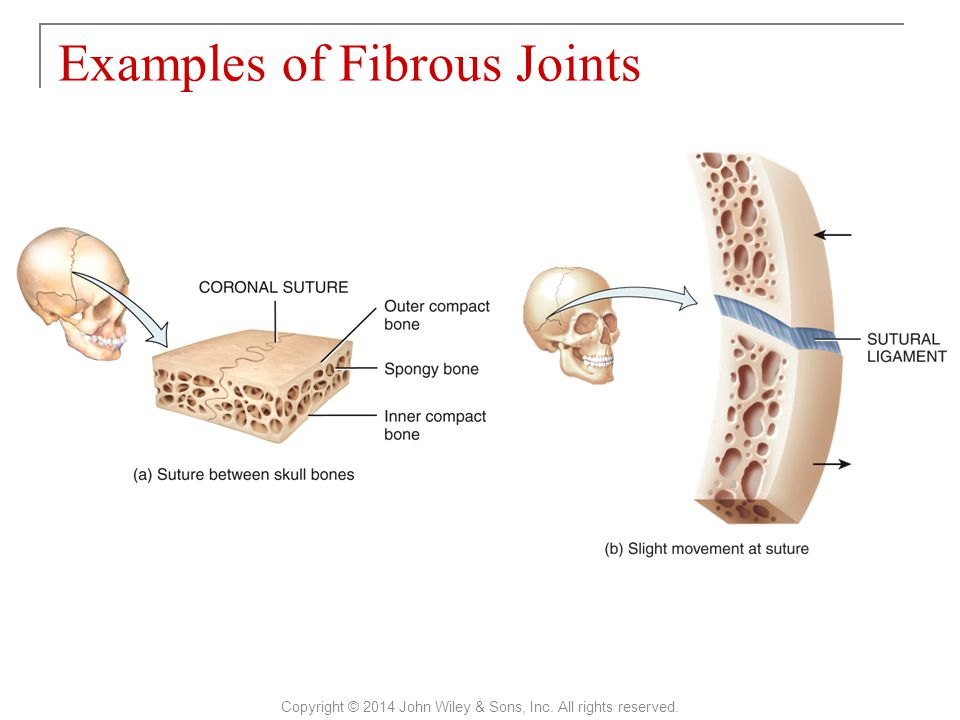 Examples of Fibrous Joints