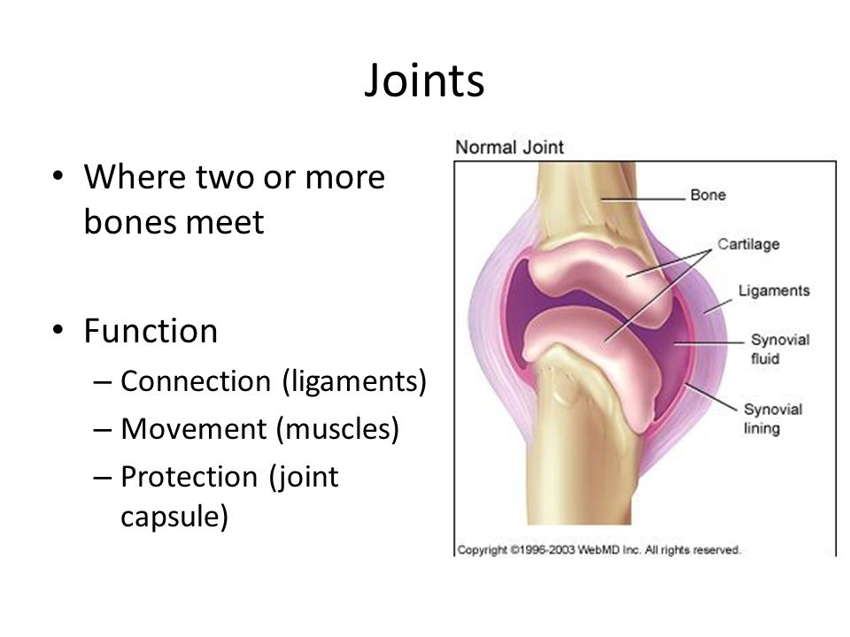 Joints Where two or more bones meet Function Connection (ligaments)