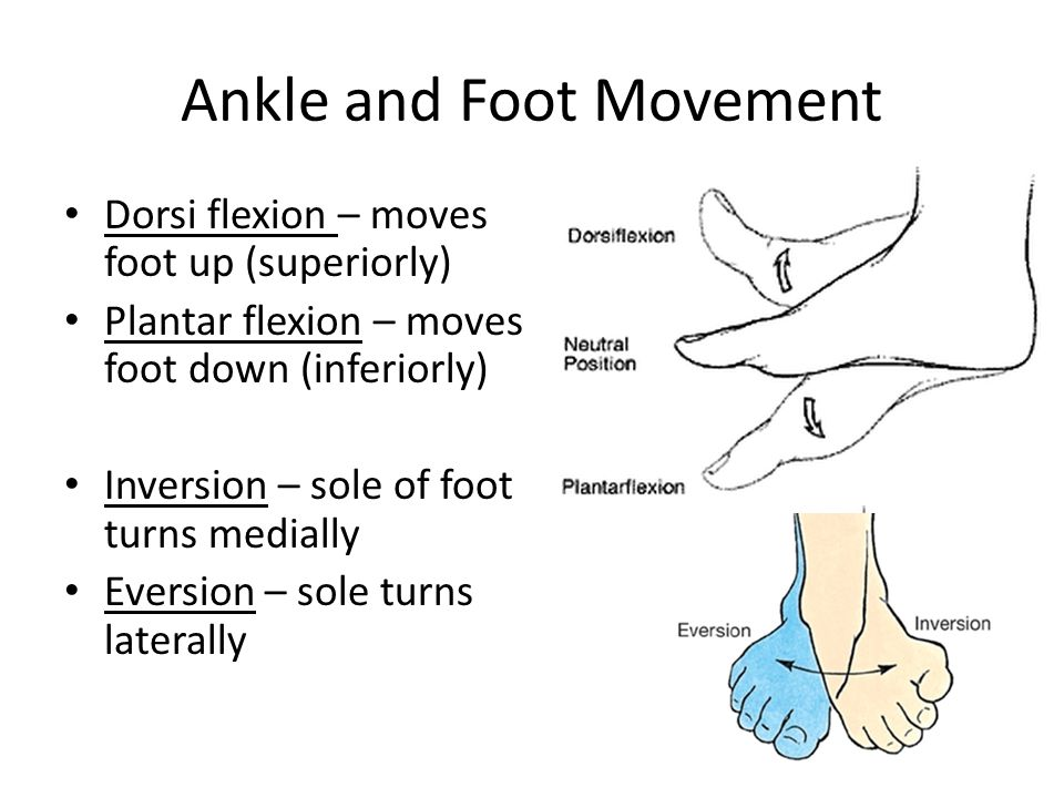 Ankle and Foot Movement