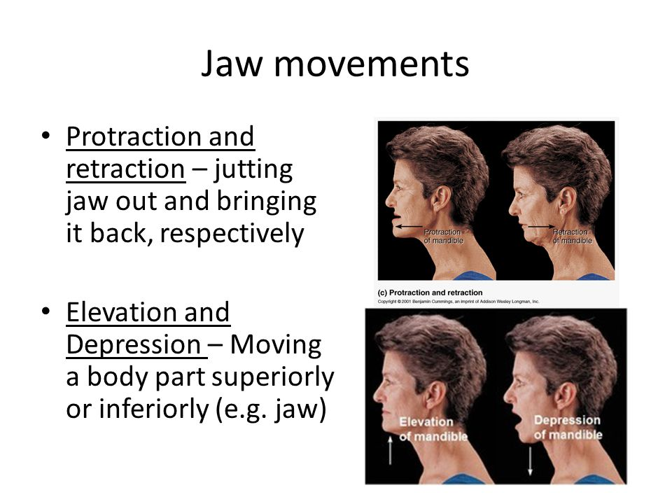 Jaw movements Protraction and retraction – jutting jaw out and bringing it back, respectively.