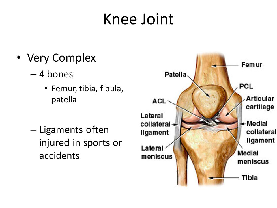 Knee Joint Very Complex 4 bones