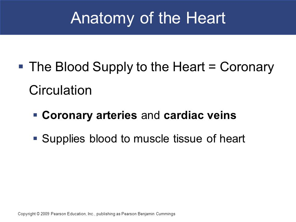 Anatomy of the Heart The Blood Supply to the Heart = Coronary Circulation. Coronary arteries and cardiac veins.
