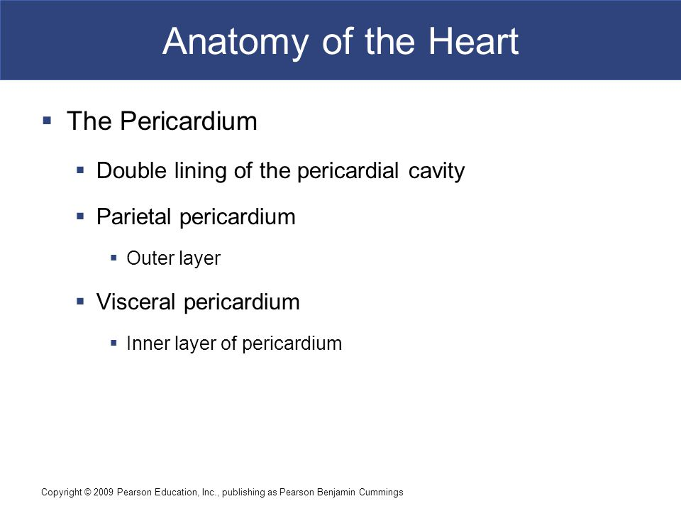 Anatomy of the Heart The Pericardium