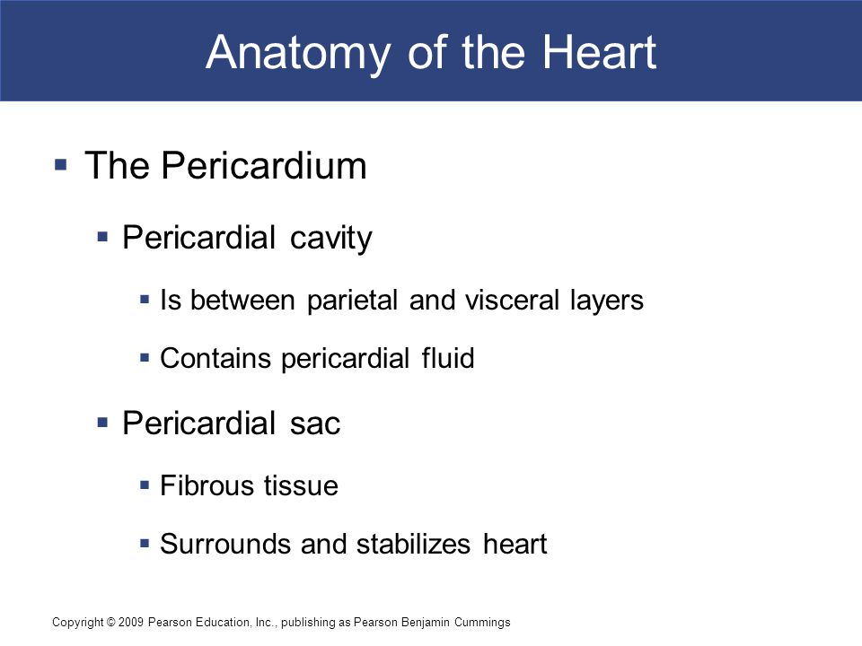Anatomy of the Heart The Pericardium Pericardial cavity