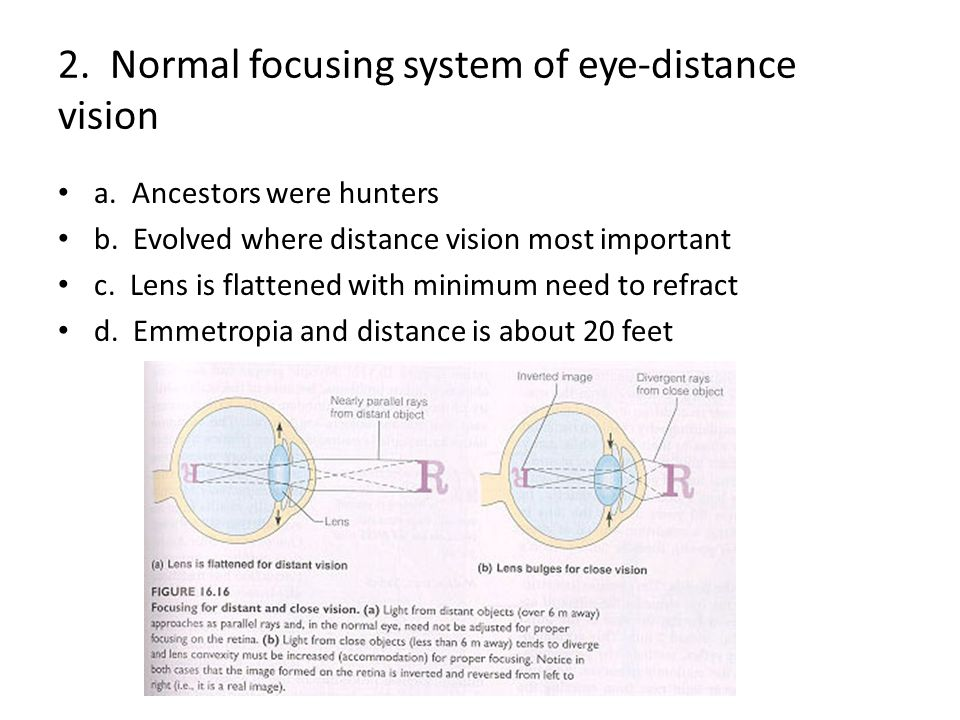 2. Normal focusing system of eye-distance vision