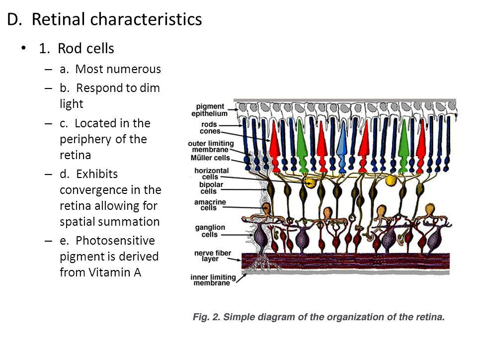 D. Retinal characteristics