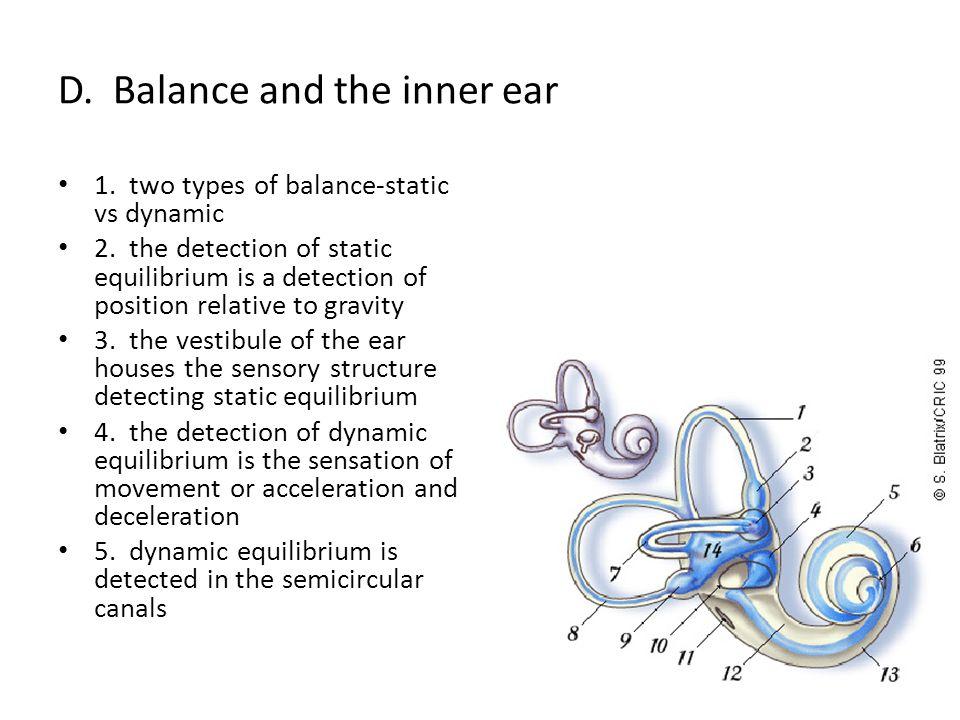 D. Balance and the inner ear