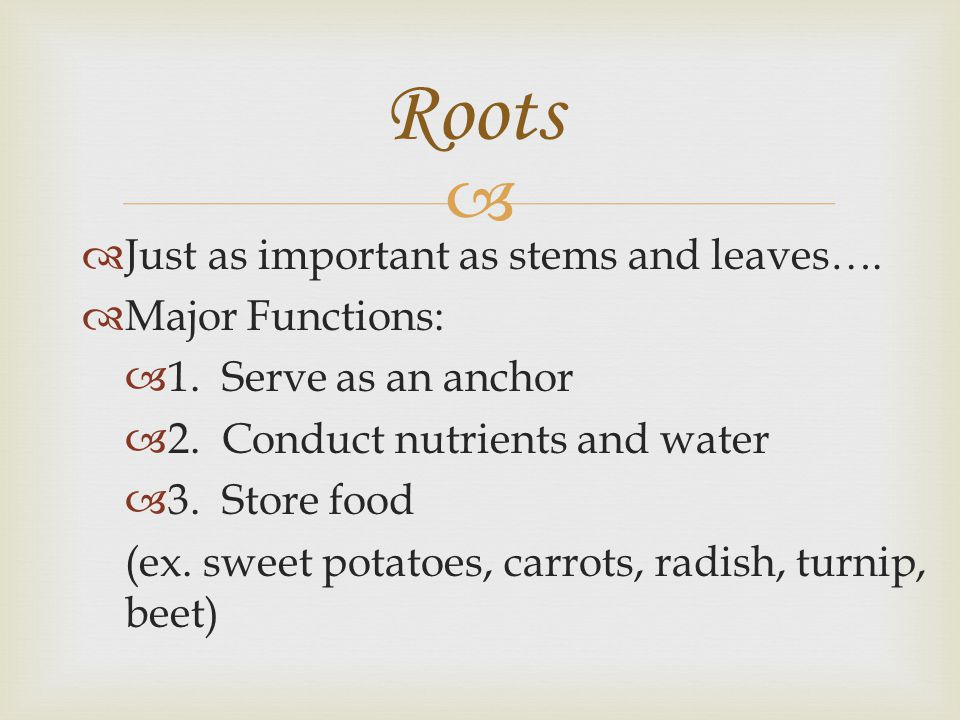 Roots Just as important as stems and leaves…. Major Functions: