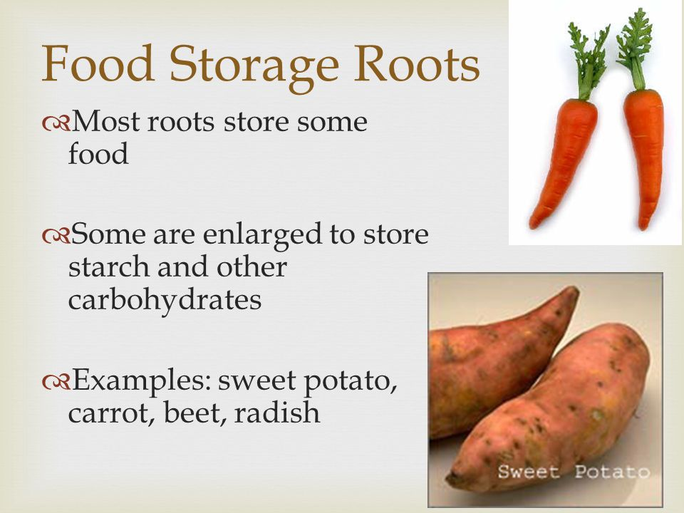 Food Storage Roots Most roots store some food