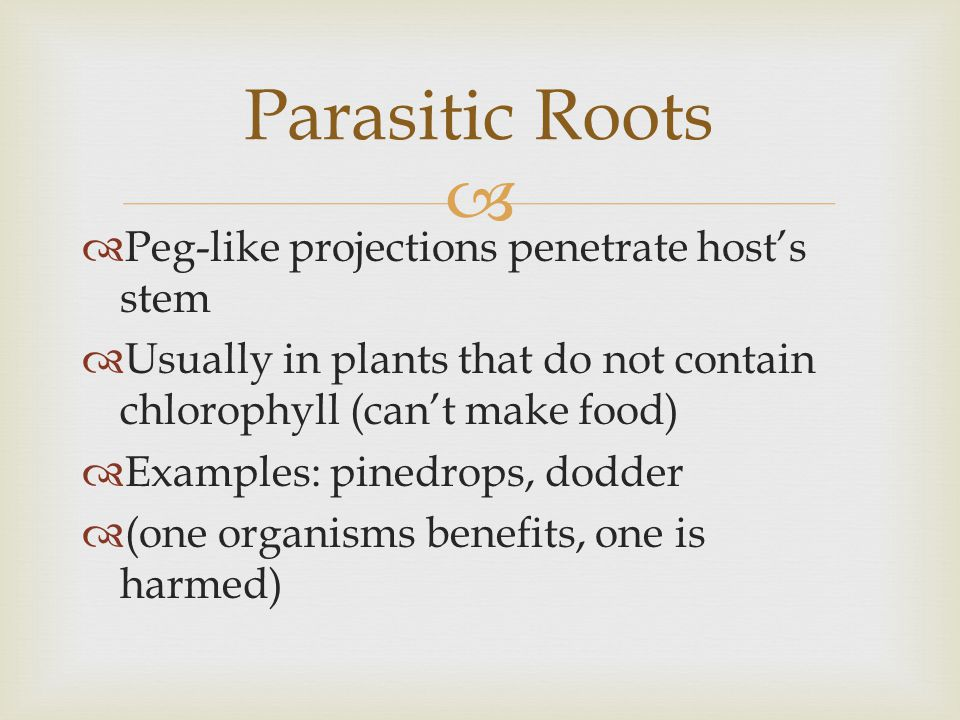 Parasitic Roots Peg-like projections penetrate host's stem