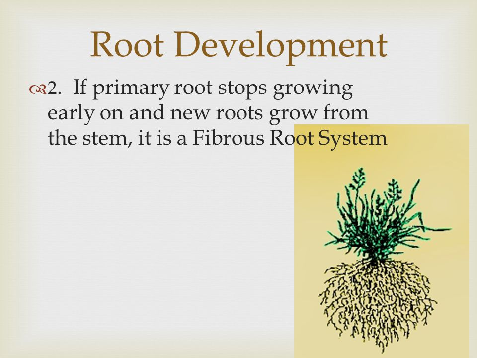Root Development 2.