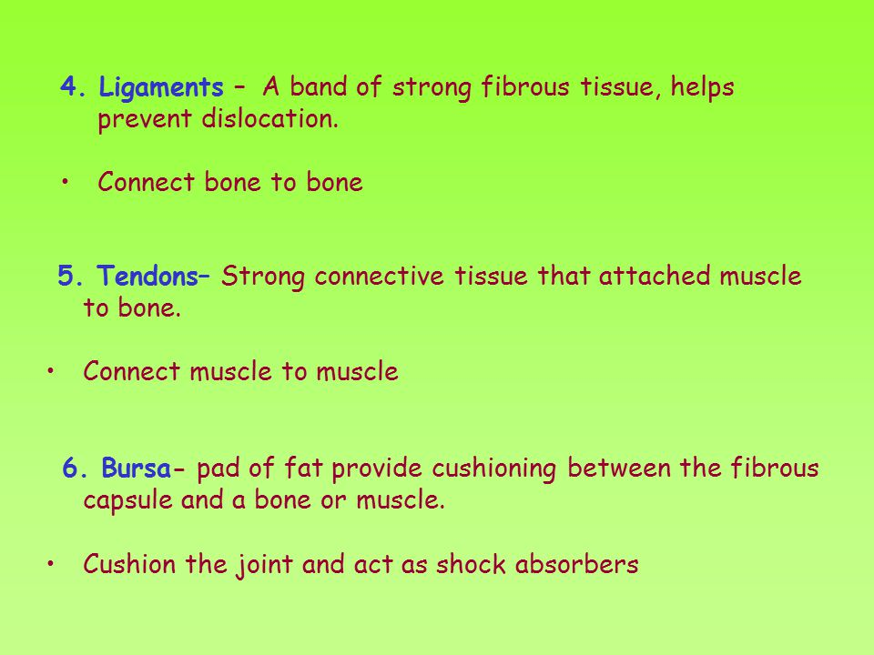 4. Ligaments – A band of strong fibrous tissue, helps prevent dislocation.