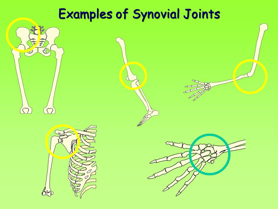 Examples of Synovial Joints