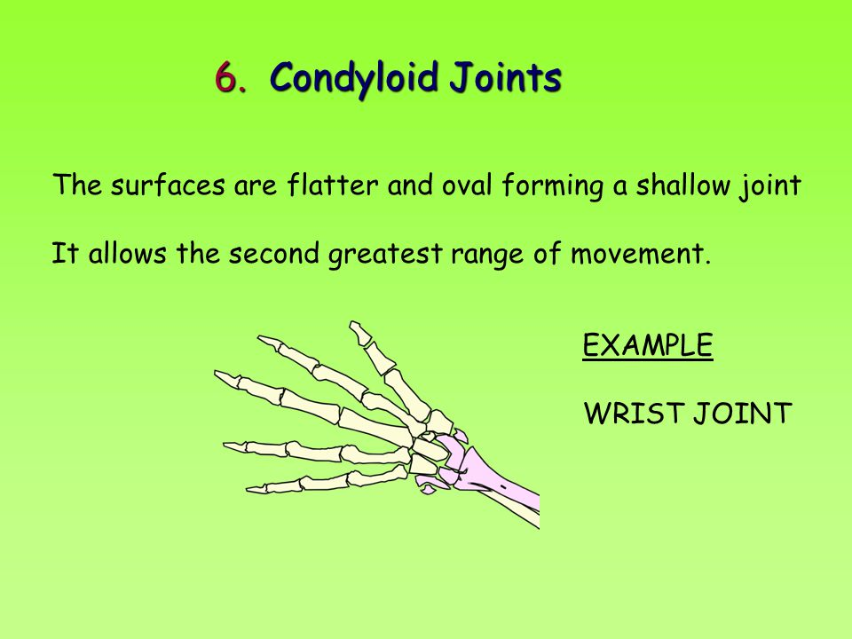 6. Condyloid Joints The surfaces are flatter and oval forming a shallow joint. It allows the second greatest range of movement.