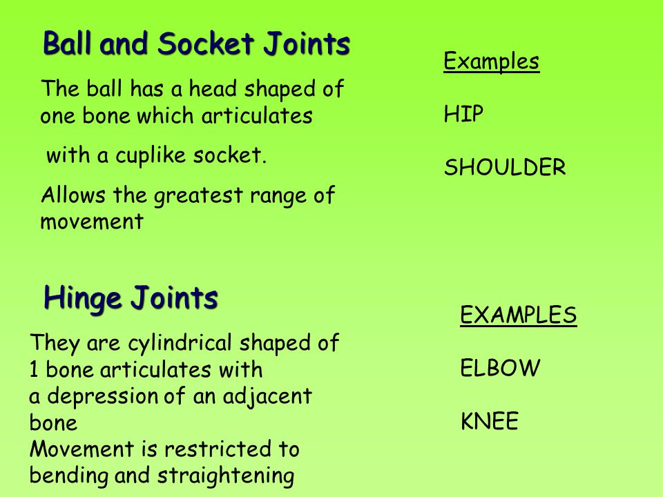 Ball and Socket Joints Hinge Joints Examples