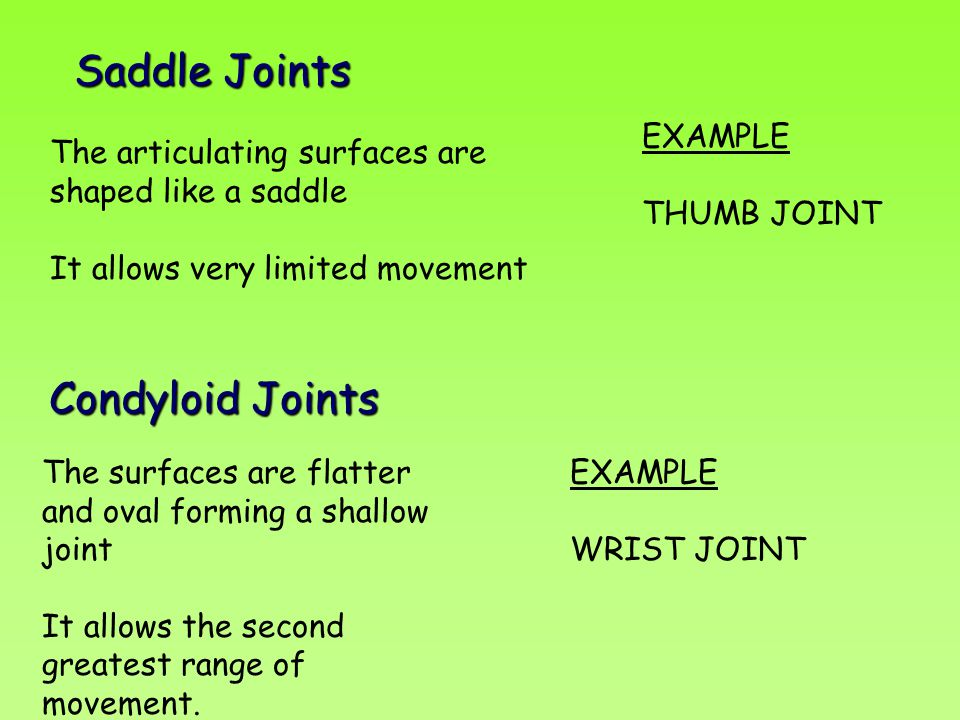 Saddle Joints Condyloid Joints EXAMPLE THUMB JOINT